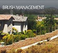 Brush Management